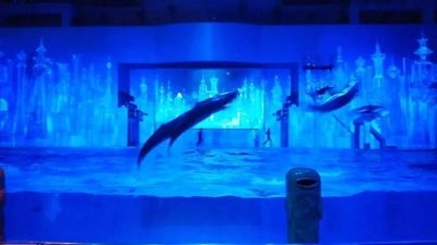 「dolphin2020」の写真